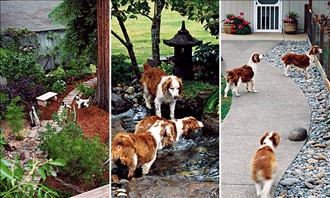 How to Create a Dog Friendly Yard | KG Landscape Management